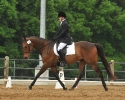 Dressage Horse to Good Home