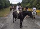 hunt horse for sale