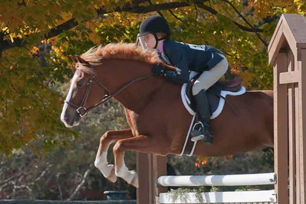 VHSA-Silver-Lining-Horse-Show-10-20-12-7375-XL